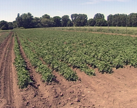 Landwirtschaft in Ditfurt